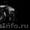 фото-видео услуги  (igi.studio@yandex.ru) #684487