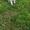 Щеночки сибирской хаски #1285397