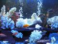 дизайн аквариумов,  обслуживание аквариумов,  продажа аквариумов и рыбок