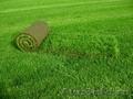 Озеленительная компания Нескучный сад (GreenTeam.ru)