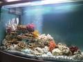 Обслуживание аквариумов, оформление и консультации