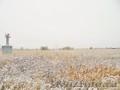 Продам садовый участок 4380 соток в д. Александровка - Заокский Район - Изображение #3, Объявление #1597554