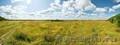Продам садовый участок 4380 соток в д. Александровка - Заокский Район - Изображение #6, Объявление #1597554